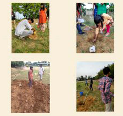 Palm Seeds Plantation on September 3rd & 4th Week